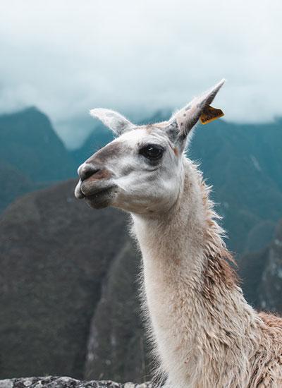 Lima, Nazca, MachuPicchu, Lake Titicaca